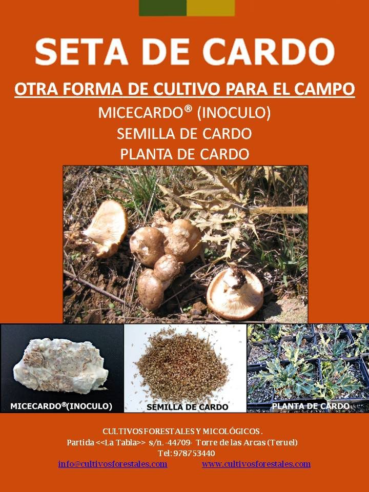 SETA DE CARDO (OTRA FORMA DE CULTIVO PARA EL CAMPO)