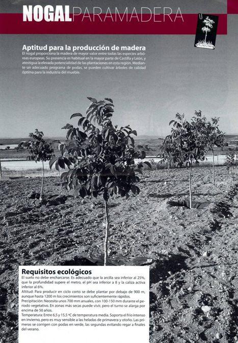 PLANTACIONES FORESTALES DE NOGAL
