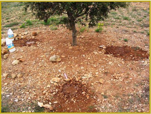 cómo cultivar la trufa