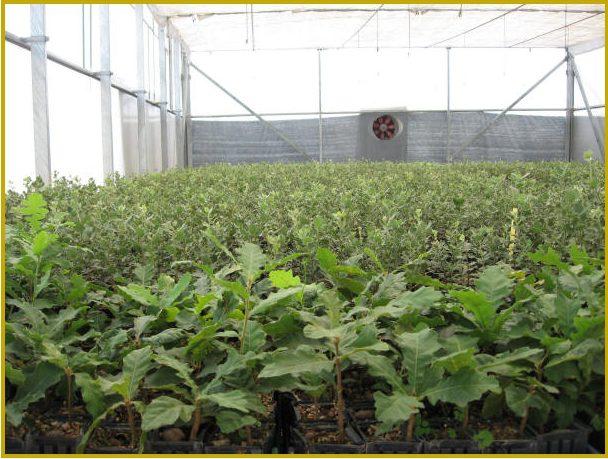 Guaranteed seedlings