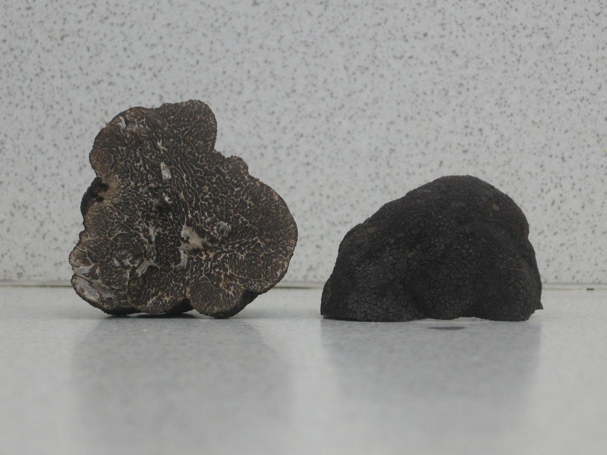 La trufa negra es la especie de trufa más valorada en gastronomía.