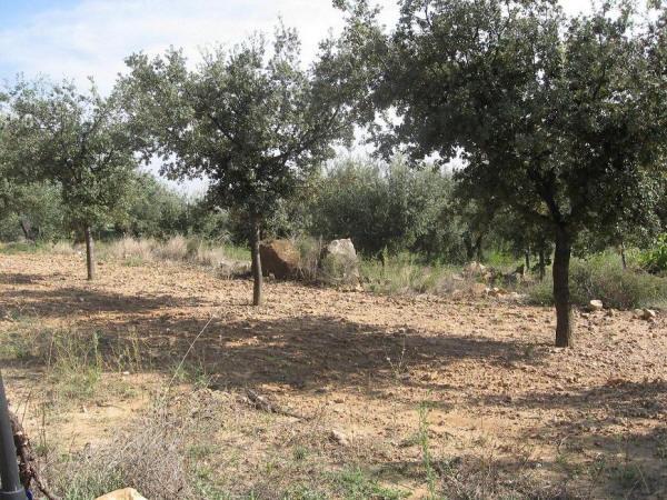 Árboles micorrizados con trufa.