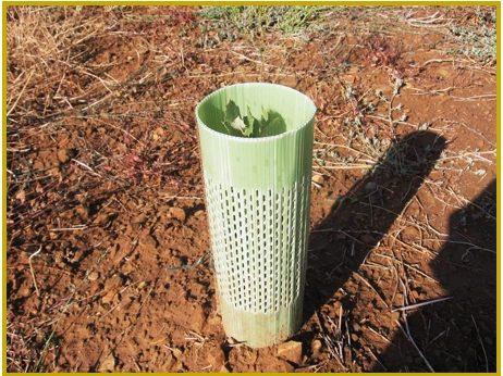Protector árbol plantación
