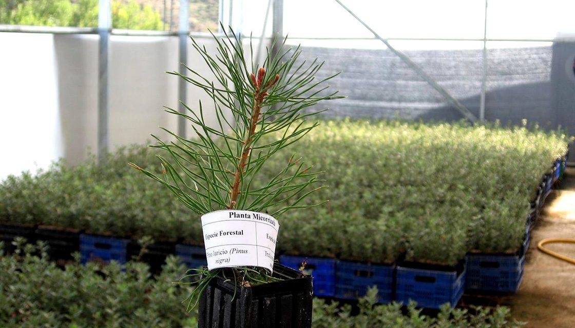 Buy seedlings