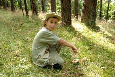 En el huerto podemos cultivar las mismas setas que encontramos en el  monte.