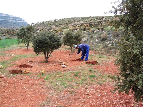 persona cultivando trufa
