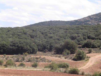 La selvicultura permite cultivar trufas en el monte.