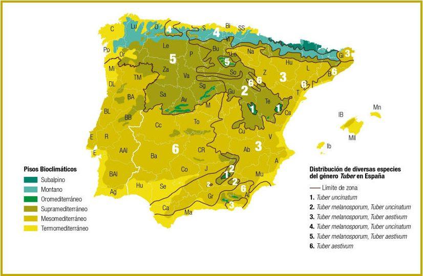 Distribución de diversas especies del género Tuber en España