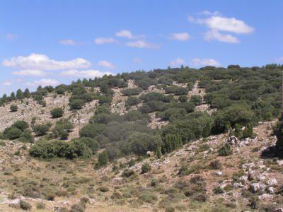 El monte produce trufa de verano de forma natural.