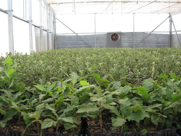 Cultivo de trufas y setas en las instalaciones de Cultivos Forestales.