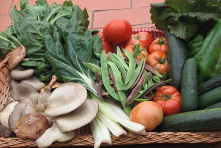 Verduras y setas recogidas en el huerto.