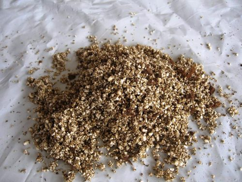 cultivo micorrizado trufa