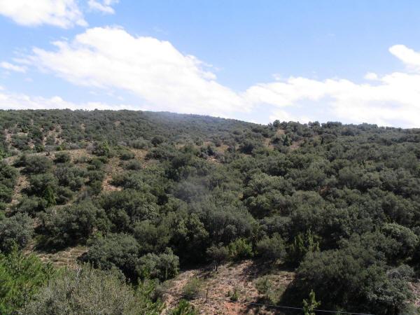 Montes de encinas productores naturales de trufa negra.