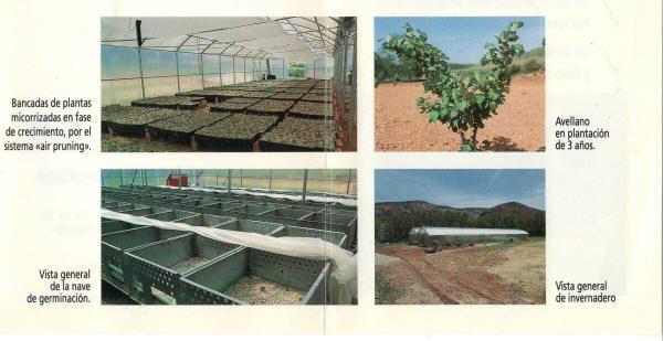 Instalaciones de Cultivos Forestales para el crecimiento de las plantas micorrizadas.