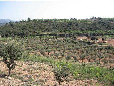 plantacion de trufas