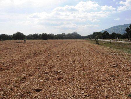 &Una buena preparación del terreno es indispensable para el cultivo de la trufa.