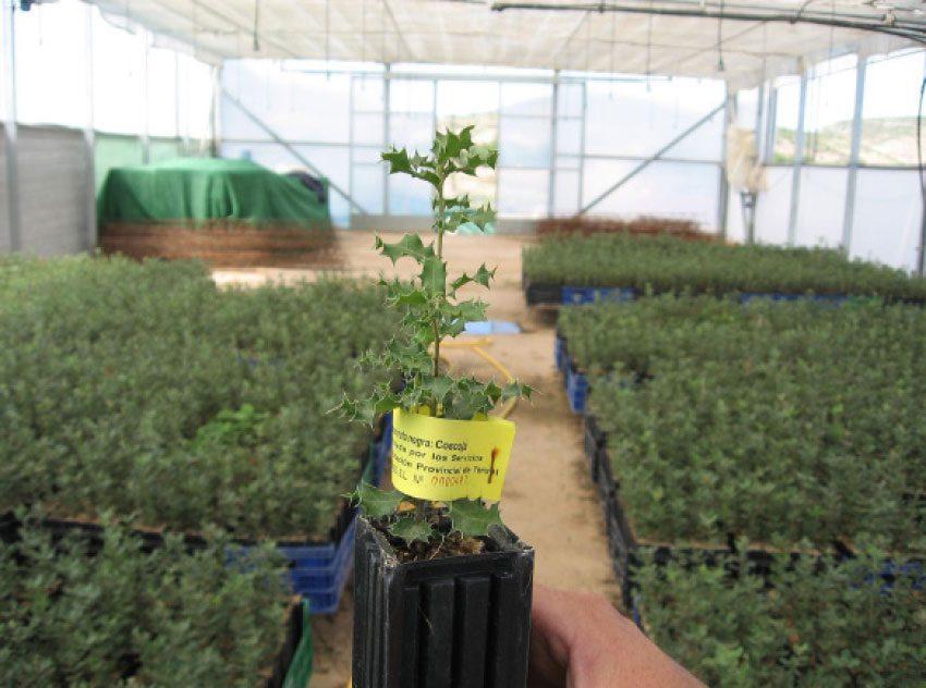Plantas micorrizadas con trufa de verano
