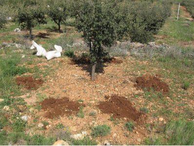pozos en plantación de trufas