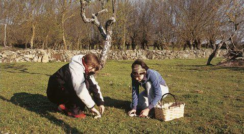 Plantar y recoger setas en el jardín.
