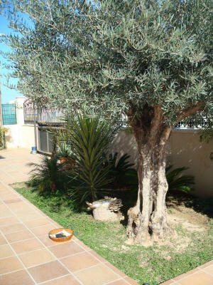 Tronco con setas plantado en el jardín.