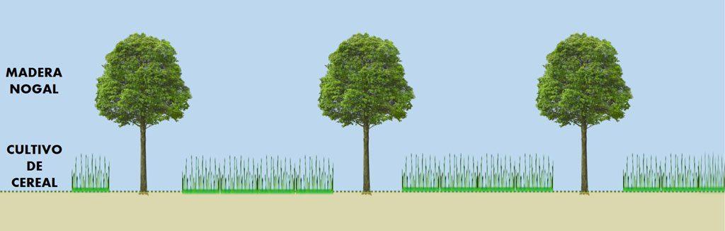 madera de nogal y extensivos