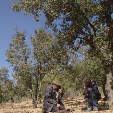 Cultivos forestales lo que nos diferencia