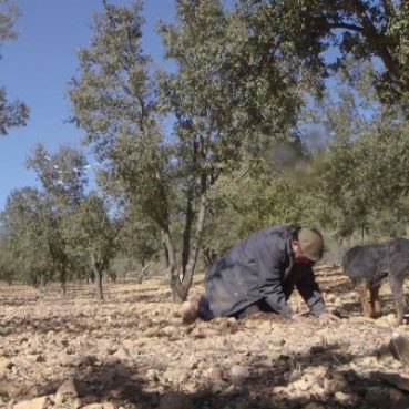 Cultivos forestales testimonios