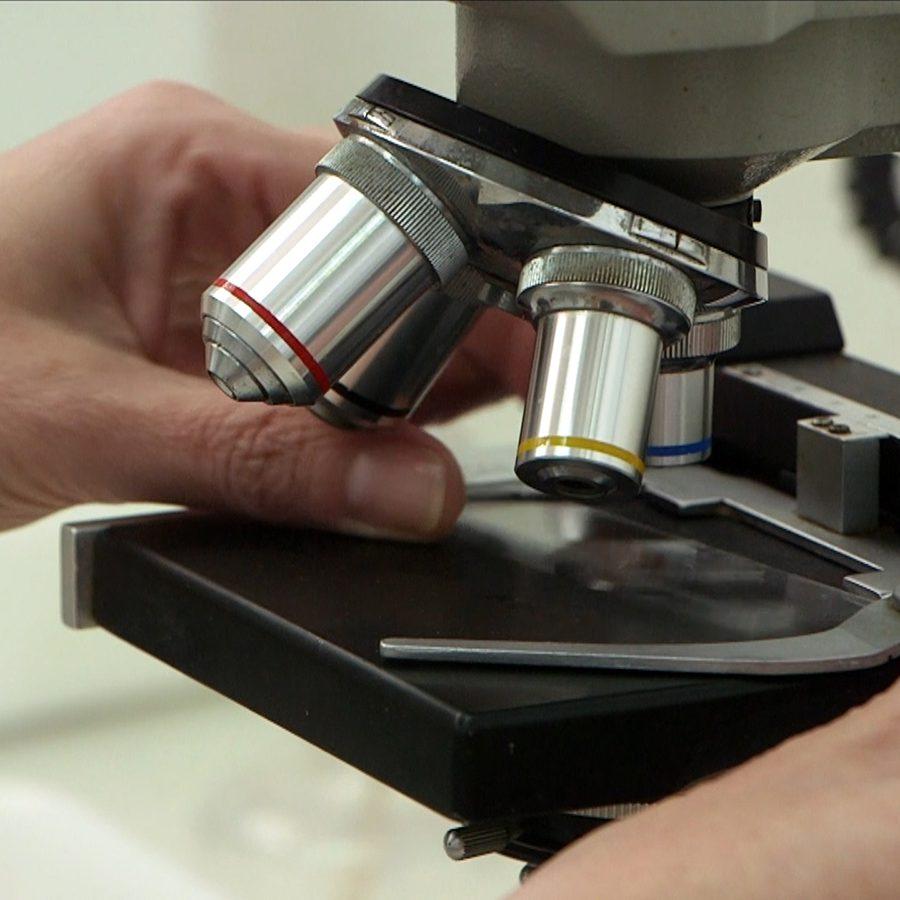 cultivos forestales microscopio detalle