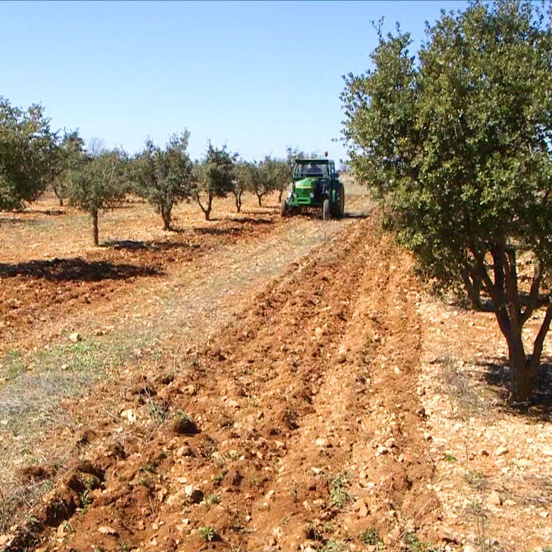 plantación tractor labrando